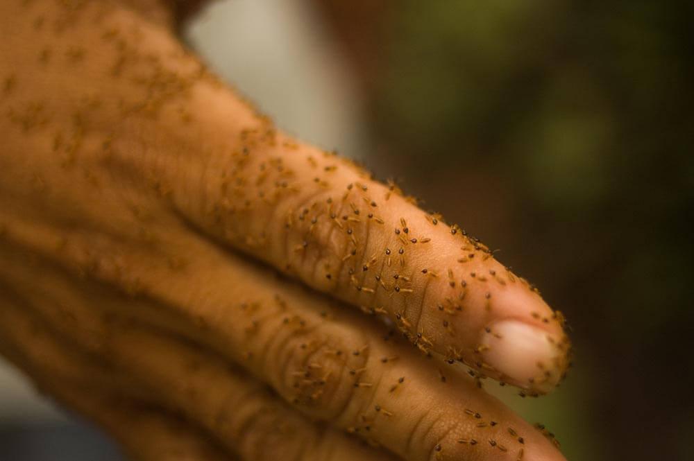 termites on hand clloseup