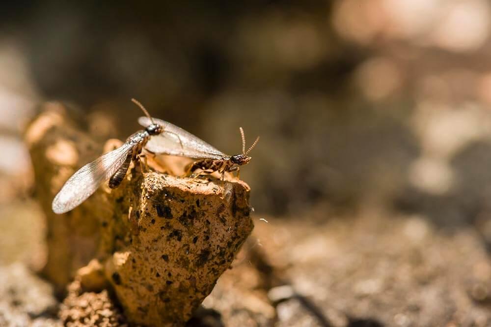 termites-02