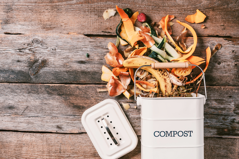 composting foods that attract rats to your hows